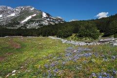 Glade цветка Стоковые Изображения RF