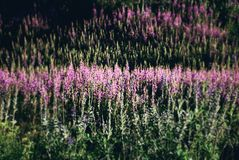 Glade цветков Стоковое Фото