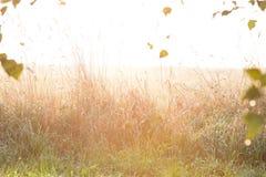 Glade ярко освещенный солнечным светом Стоковые Изображения