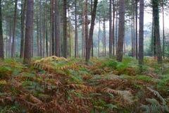Glade 2 del terreno boscoso Fotografia Stock Libera da Diritti