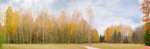 Glade in autumn park with birches in the background. Panorana of the glade in autumn park with walkway and birch trees in the background on a cloudy day stock photography