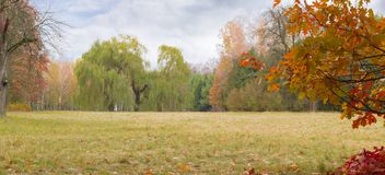 Glade in autumn park with old willows in the background Stock Images