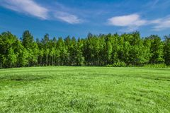 Glade on the background of birch forest stock photo