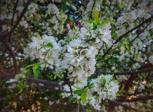 Glade blommor fotografering för bildbyråer