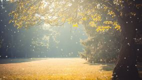 Glade branch of a tree with leaves sunlight yellow filter. With many soft flying white poplar fluff. Cinemagraph seamless loop animation motion gif render stock footage