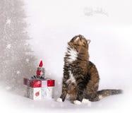 Glade Cat Looking för jultomten Fotografering för Bildbyråer