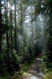 Glade da floresta Fotografia de Stock