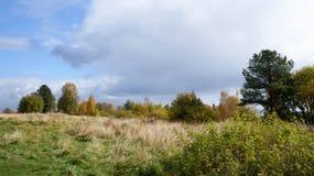 Glade da floresta Imagens de Stock Royalty Free