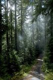 Glade del terreno boscoso fotografia stock