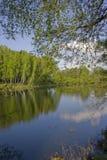 Glade dietro il fiume in legno di estate Fotografia Stock