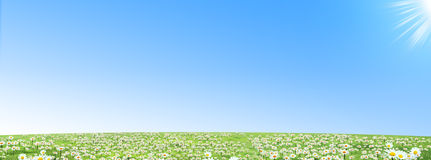 Glade. Field of daisies , spring day Royalty Free Stock Image