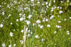 Glade of flowers of the family of the Astrological. Glade of flowers in the forest similar to a dandelion field and belongs to the family of the Astrope. Grow Stock Images