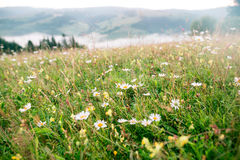 Glade with flowers and a mountain range at sunrise Royalty Free Stock Image