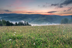 Glade with flowers and a mountain range at sunrise Stock Photos