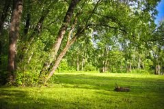 Glade in the forest. Glade in the summer forest at sunny day Royalty Free Stock Photo