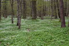 Glade in the forest with flowers royalty free stock photos