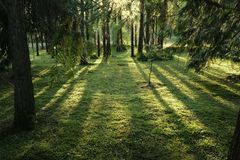 Magic forest in the rays of the setting sun. Tinted stock image