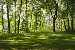 Glade in the forest at spring morning. background, nature. royalty free stock images