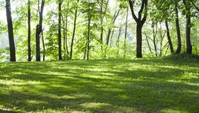 Glade in the forest at spring morning. background, nature. Glade with grass in the forest at spring morning. background, nature royalty free stock photos