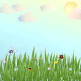 Glade with a grass and insects. Sky Royalty Free Stock Image