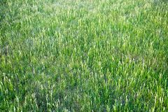 Glade of grasses late spring Interior backgrounds textures. Interior texture backgrounds royalty free stock photos