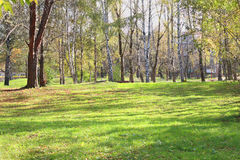 Glade with green grass in park with birches Stock Photo