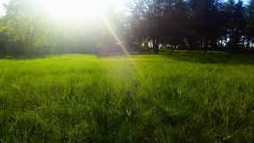 Green glade under the sun royalty free stock photography