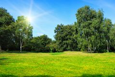 Glade with green trees and sun. Glade with green birch trees and sun on blue sky stock images