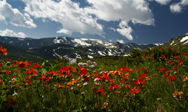Glade montanhoso foto de stock royalty free