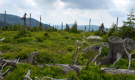Glade in mountain Royalty Free Stock Photos