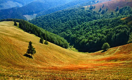Glade in the mountains. Carpathian glade in the mountains royalty free stock photos