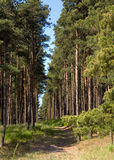 The Glade in National park Curonian Spit. Baltic see Royalty Free Stock Photo