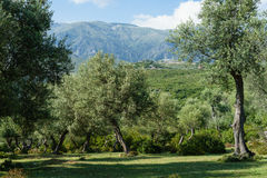 Glade near Dhermi Albania. Beauiful and lonely glade in front of a great mountain scenery royalty free stock photo