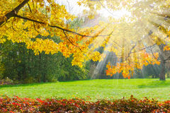 Glade in the park with branches in the foreground autumn Stock Photo