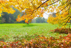 Glade in the park with branches in the foreground autumn Stock Image