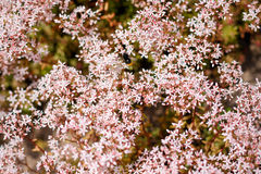 Glade of pink flowers Royalty Free Stock Photography