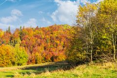Glade in shade of autumn forest. Wonderful sunny weather. colorful foliage on trees stock photos