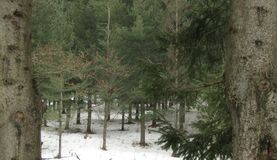 Glade in a snowy forest Stock Image
