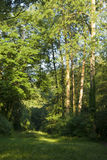 Glade in sunlit wood. Scenic view of glade in sunlit wood, summer scene royalty free stock photography