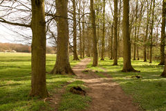 A Glade of trees in the English Rural Landscape Royalty Free Stock Images