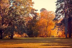 Glade with trees in the park. Big Glade with trees in the park royalty free stock photos