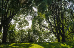 Glade among the trees. Glade with shadows among the trees in a wood or arboretum at Tampere in Finland Stock Photo