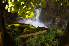 Glade. Between the trees with waterfall Royalty Free Stock Photography