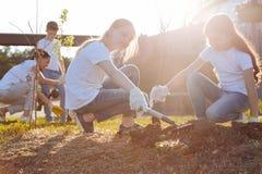 Glade ungar som framkallar ny vegetation Fotografering för Bildbyråer