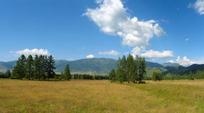 Glade Valley in Uimon. Gorny Altai Stock Photos