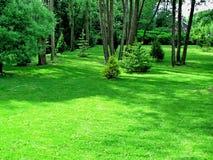 Glade verde in un legno Fotografia Stock