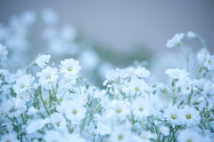 Glade of white delicate flowers. Floral background Stock Photography
