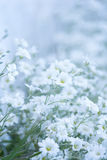 Glade of white delicate flowers. Floral background Stock Photo