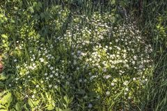 Glade of wild herbs. Shining in summer time royalty free stock photography