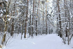 Glade in winter forest Stock Images